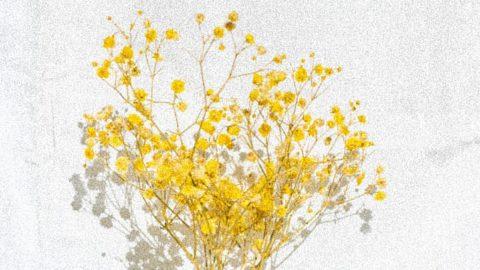 EL VOLVER DE LOS PECES. IRENE ALBA CALDERÓN – Editorial Poesía eres tú. Publicar un libro de poesía.